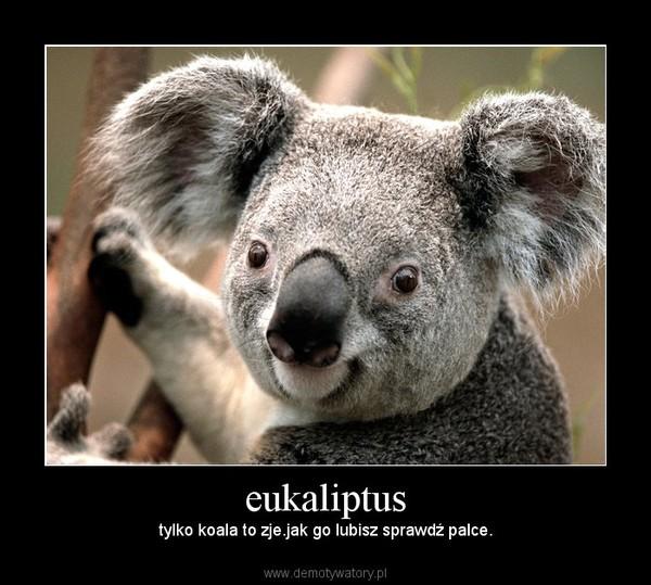 eukaliptus – tylko koala to zje.jak go lubisz sprawdź palce.