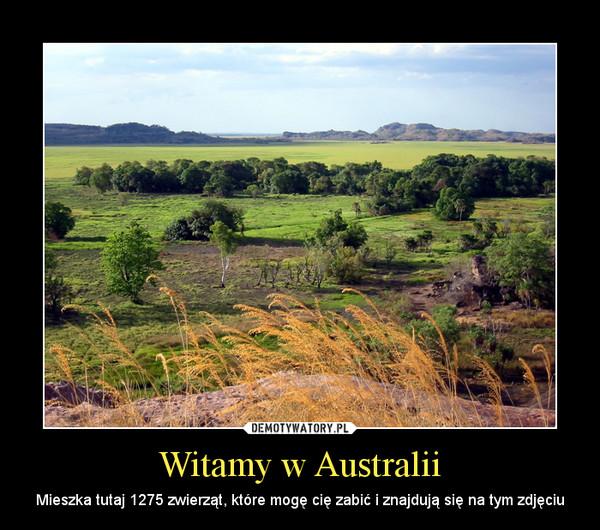 Witamy w Australii – Mieszka tutaj 1275 zwierząt, które mogę cię zabić i znajdują się na tym zdjęciu