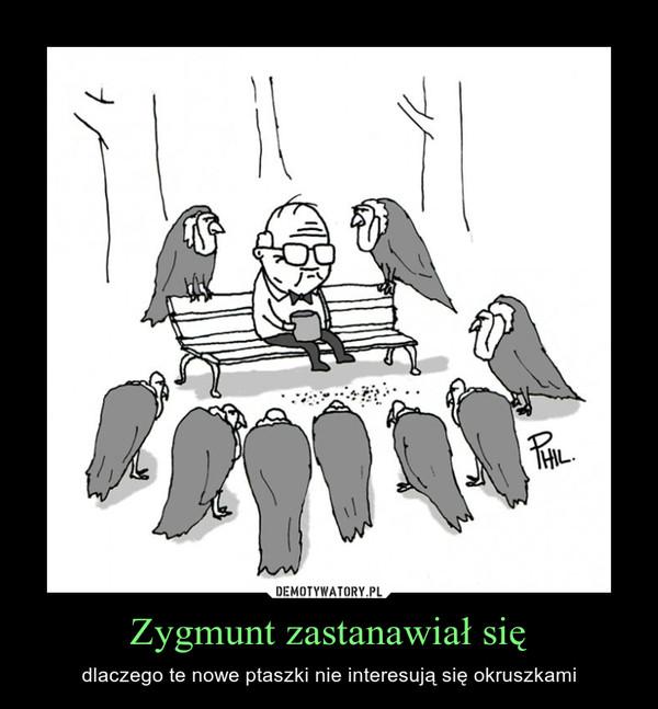 Zygmunt zastanawiał się – dlaczego te nowe ptaszki nie interesują się okruszkami