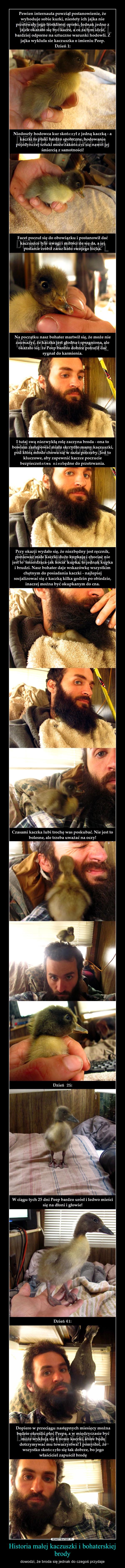 Historia małej kaczuszki i bohaterskiej brody – dowodzi, że broda się jednak do czegoś przydaje