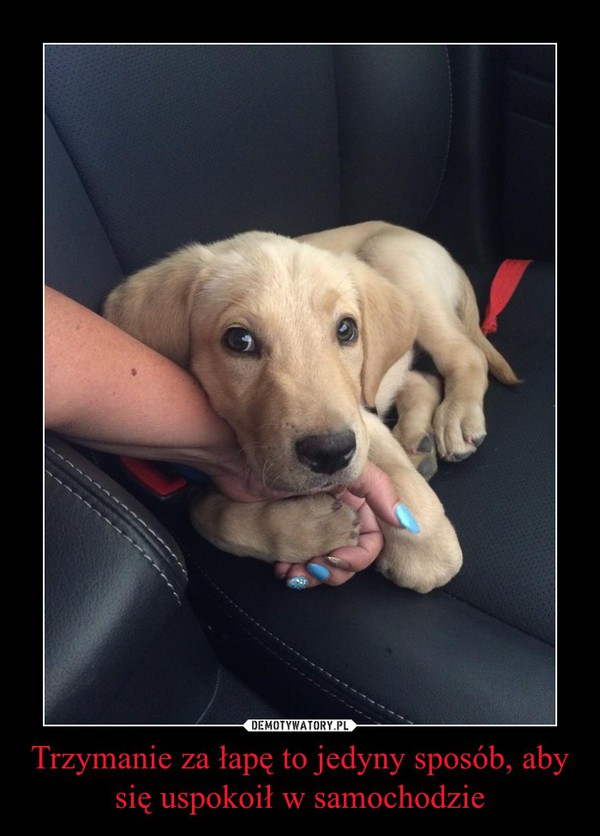 Trzymanie za łapę to jedyny sposób, aby się uspokoił w samochodzie –