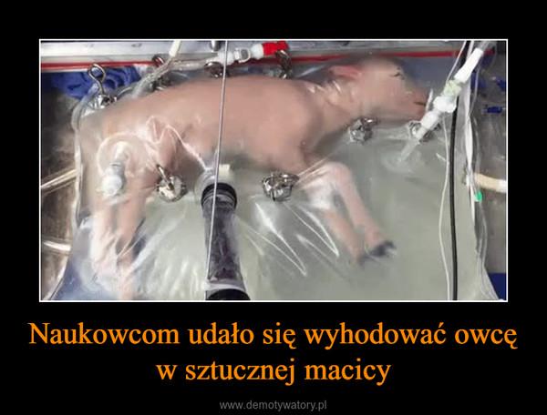 Naukowcom udało się wyhodować owcę w sztucznej macicy –