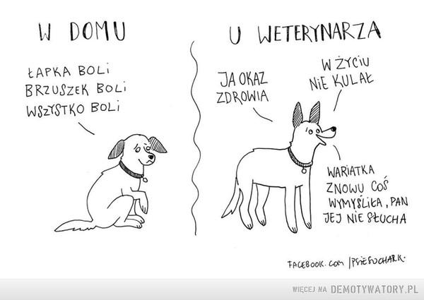 Typowy pies –  N DOMUU WETERYNARZAŁAPKA BOLIBRZUSZEK BOLIWSzISTKO BoLiW ZYCIUJA OKAZZDROWIA NIE KULAkNA RATKAZNOWU CoSWYMYSLİCA , PAN