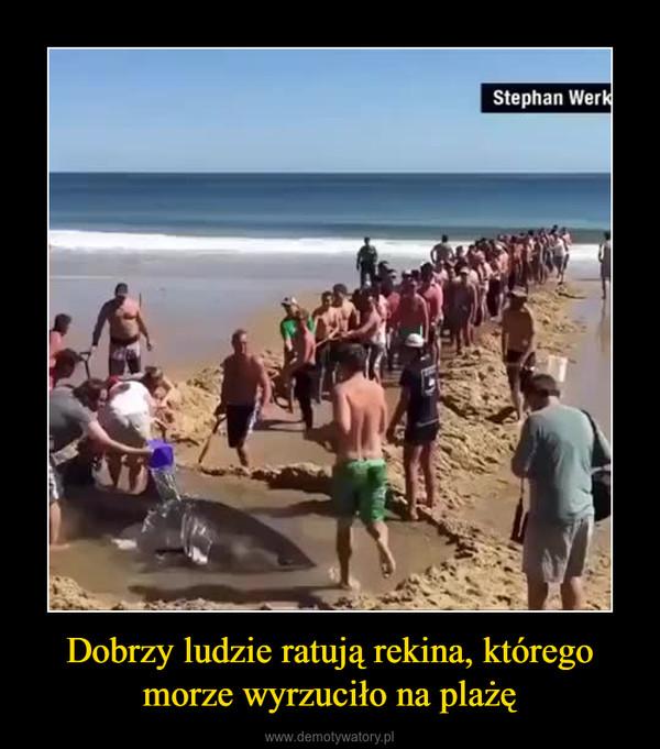 Dobrzy ludzie ratują rekina, którego morze wyrzuciło na plażę –