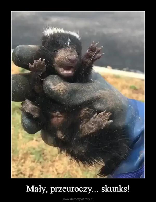 Mały, przeuroczy... skunks! –