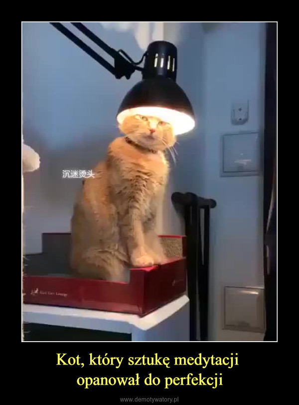 Kot, który sztukę medytacji opanował do perfekcji –