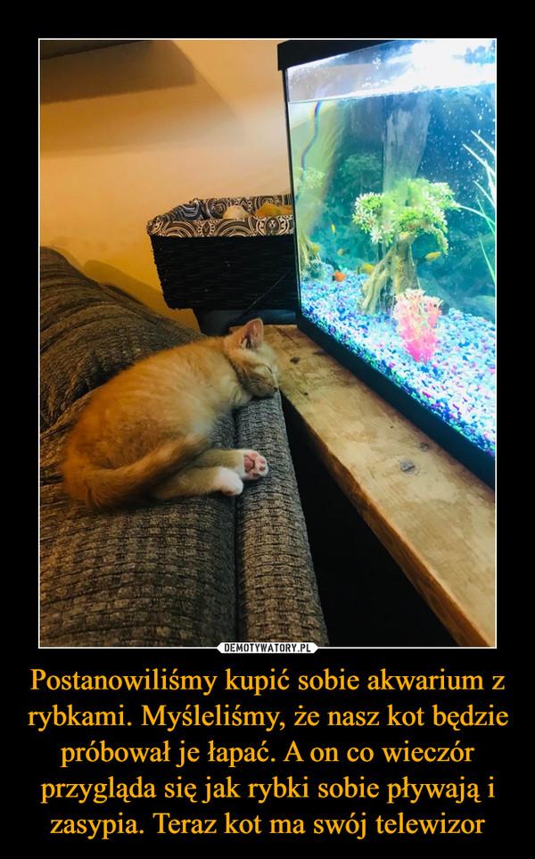 Postanowiliśmy kupić sobie akwarium z rybkami. Myśleliśmy, że nasz kot będzie próbował je łapać. A on co wieczór przygląda się jak rybki sobie pływają i zasypia. Teraz kot ma swój telewizor –