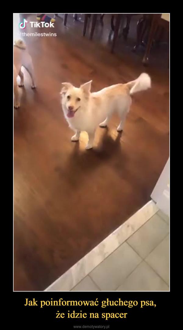 Jak poinformować głuchego psa, że idzie na spacer –