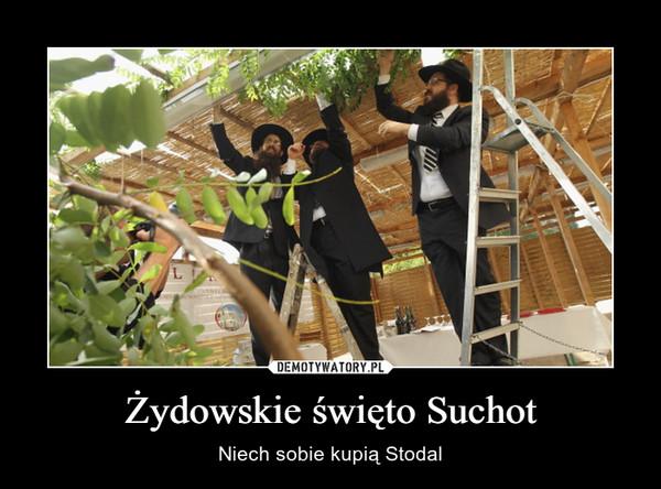Żydowskie święto Suchot – Niech sobie kupią Stodal