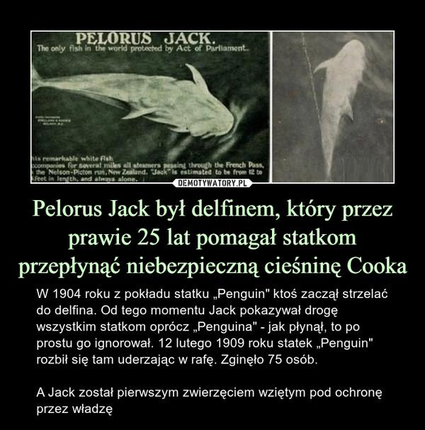 """Pelorus Jack był delfinem, który przez prawie 25 lat pomagał statkom przepłynąć niebezpieczną cieśninę Cooka – W 1904 roku z pokładu statku """"Penguin"""" ktoś zaczął strzelać do delfina. Od tego momentu Jack pokazywał drogę wszystkim statkom oprócz """"Penguina"""" - jak płynął, to po prostu go ignorował. 12 lutego 1909 roku statek """"Penguin"""" rozbił się tam uderzając w rafę. Zginęło 75 osób.A Jack został pierwszym zwierzęciem wziętym pod ochronę przez władzę"""