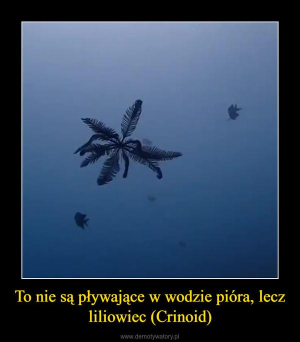 To nie są pływające w wodzie pióra, lecz liliowiec (Crinoid) –
