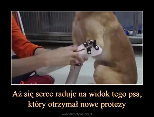Aż się serce raduje na widok tego psa, który otrzymał nowe protezy –