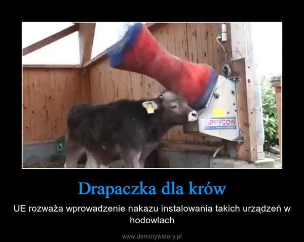 Drapaczka dla krów – UE rozważa wprowadzenie nakazu instalowania takich urządzeń w hodowlach