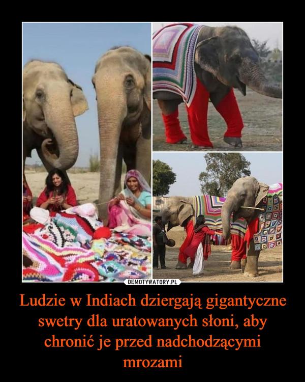 Ludzie w Indiach dziergają gigantyczne swetry dla uratowanych słoni, aby chronić je przed nadchodzącymi mrozami –