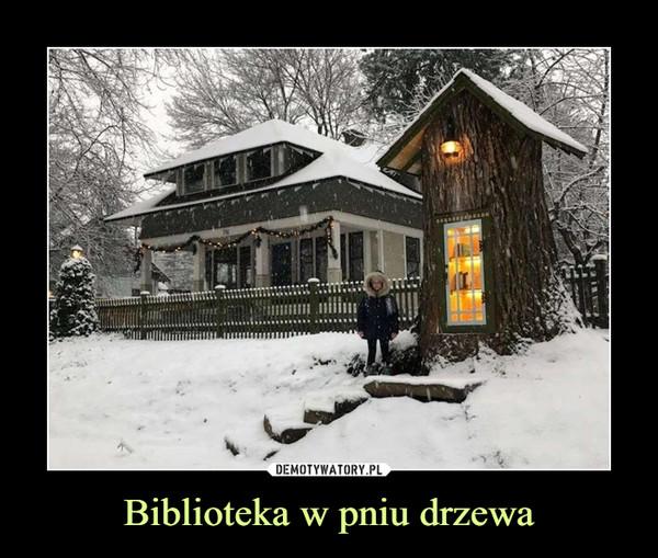 Biblioteka w pniu drzewa –
