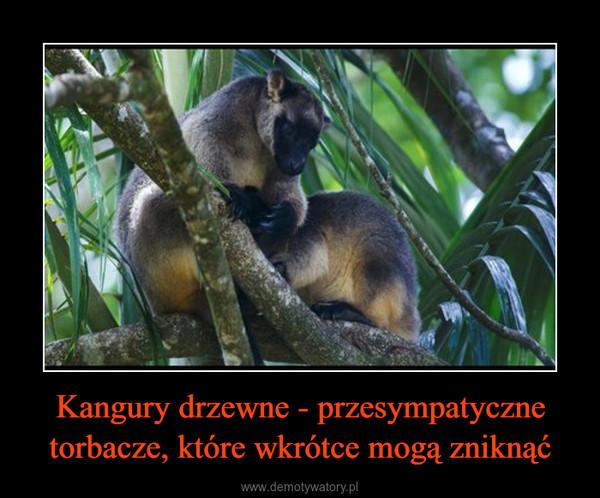 Kangury drzewne - przesympatyczne torbacze, które wkrótce mogą zniknąć –