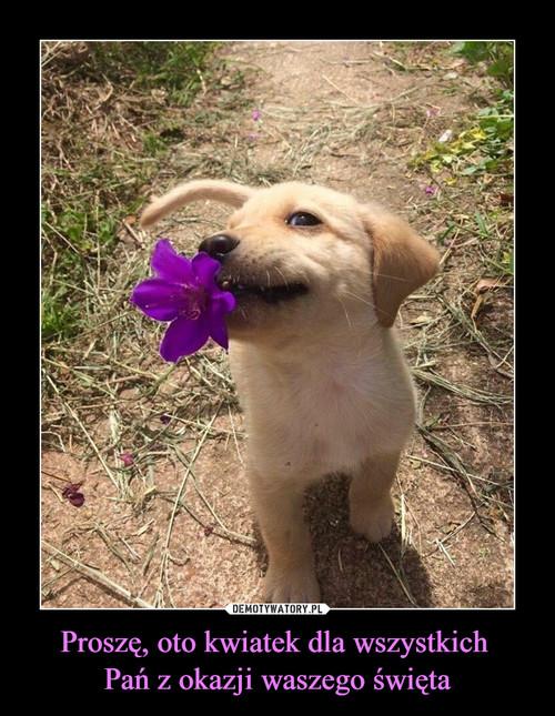 Proszę, oto kwiatek dla wszystkich  Pań z okazji waszego święta