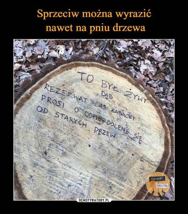 –  To był żywy dąb Rezerwat Las Kabacki prosi o odpierdolenie się od starych drzew