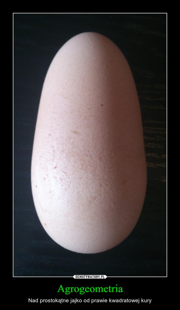 Agrogeometria – Nad prostokątne jajko od prawie kwadratowej kury