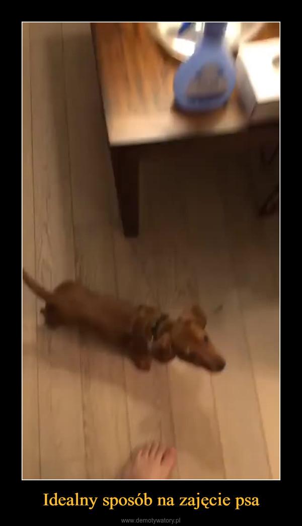 Idealny sposób na zajęcie psa –