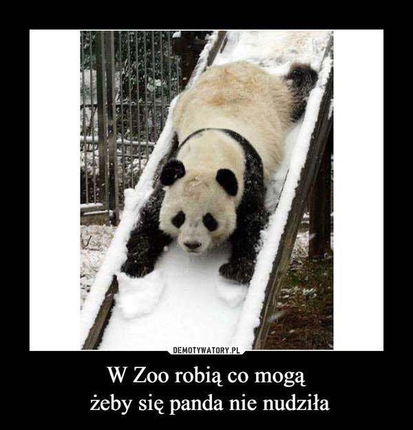 W Zoo robią co mogą żeby się panda nie nudziła –