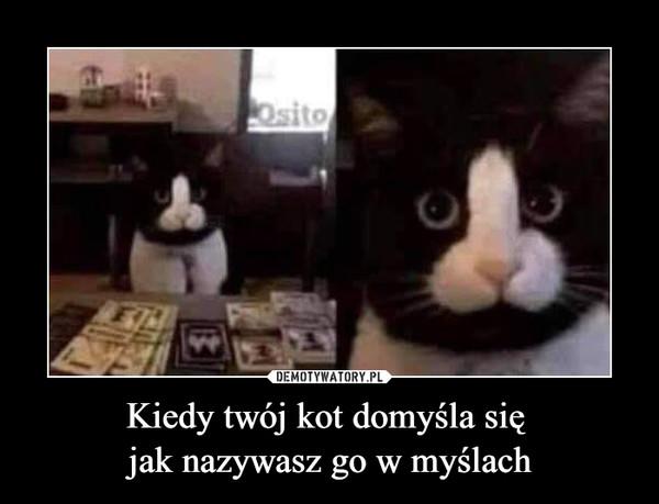 Kiedy twój kot domyśla się jak nazywasz go w myślach –