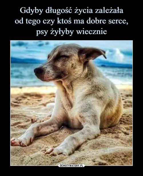 Gdyby długość życia zależała od tego czy ktoś ma dobre serce, psy żyłyby wiecznie