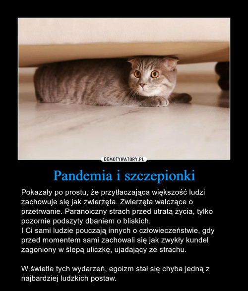Pandemia i szczepionki
