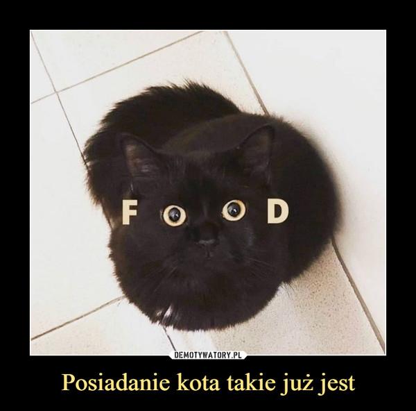 Posiadanie kota takie już jest –