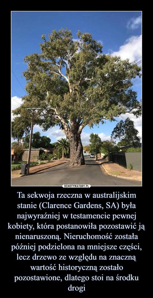 Ta sekwoja rzeczna w australijskim stanie (Clarence Gardens, SA) była najwyraźniej w testamencie pewnej kobiety, która postanowiła pozostawić ją nienaruszoną. Nieruchomość została później podzielona na mniejsze części, lecz drzewo ze względu na znaczną wartość historyczną zostało pozostawione, dlatego stoi na środku drogi