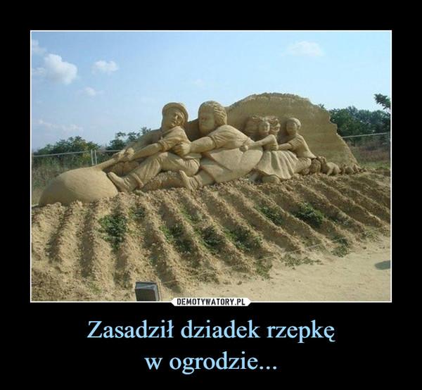 Zasadził dziadek rzepkęw ogrodzie... –
