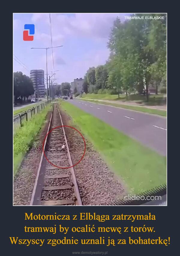 Motornicza z Elbląga zatrzymała tramwaj by ocalić mewę z torów. Wszyscy zgodnie uznali ją za bohaterkę! –