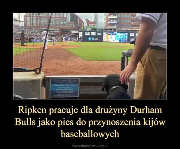 Ripken pracuje dla drużyny Durham Bulls jako pies do przynoszenia kijów baseballowych –